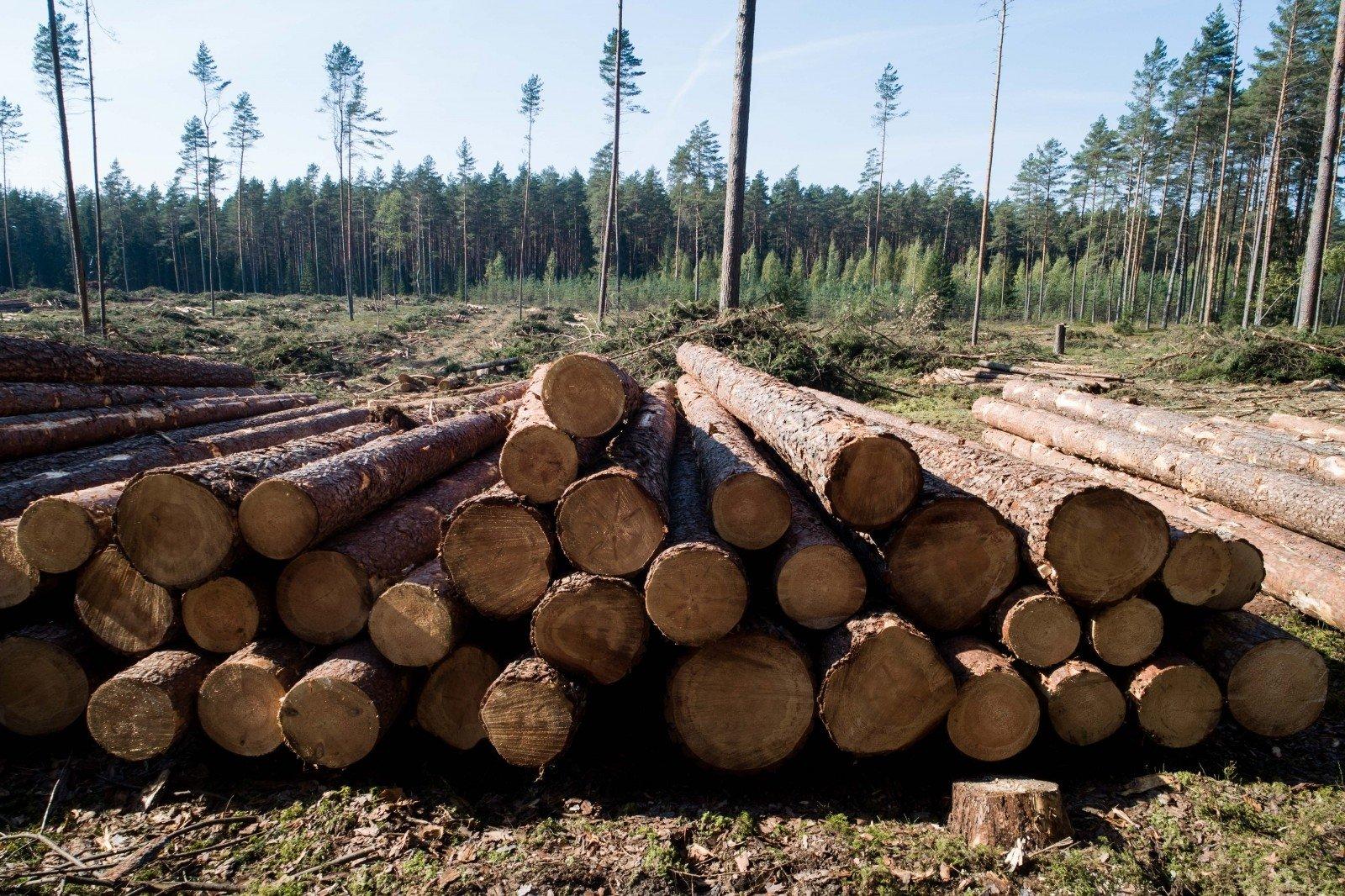 miško prekyba mediena