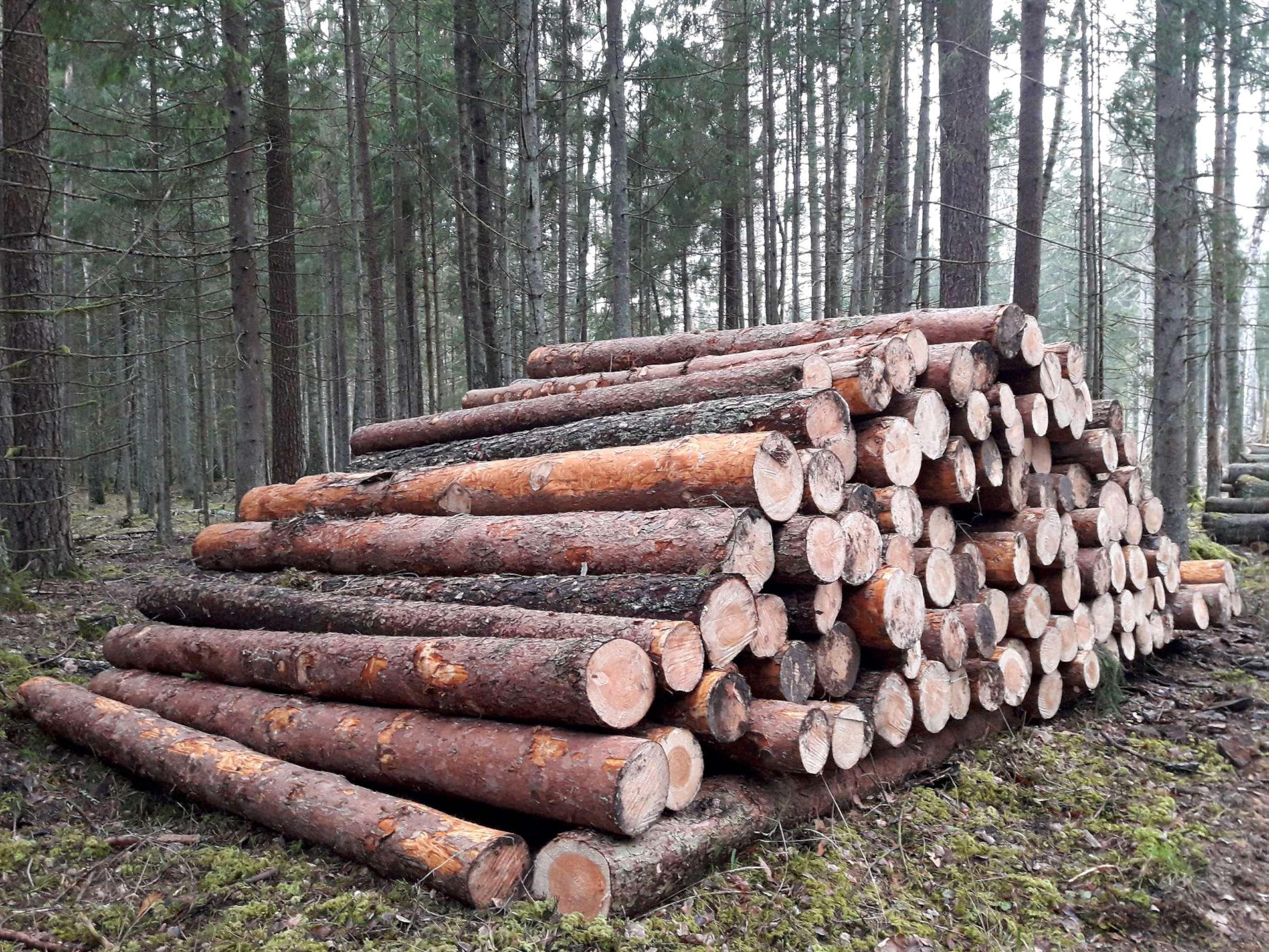 🌳 Dzūkijos mediena | Miško supirkimas | Medienos pardavimas